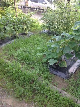 家庭菜園の草むしり